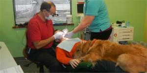 Dentofobia znalazła psiego pogromcę