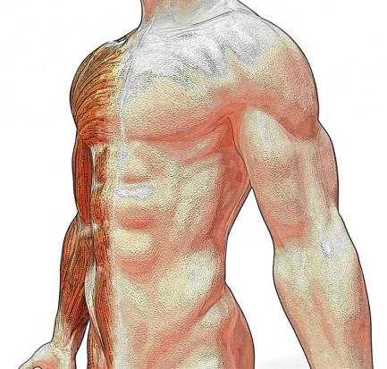Wirtualny stół do nauki anatomii (fot. sxc.hu)