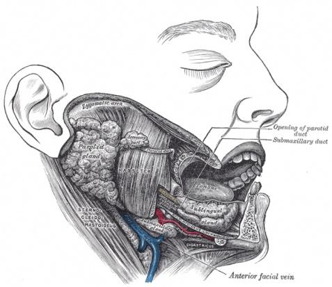 Promieniowanie RTG a kserostomia (fot. Wikipedia.org)