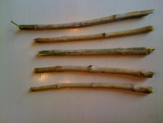 Irygator z olejem konopnym czy miswak? – alternatywne produkty do higieny atakują