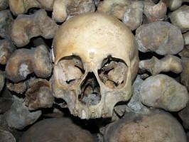 Ile kosztuje czaszka?