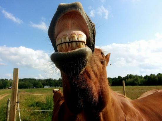 Zagraj końskimi zębami