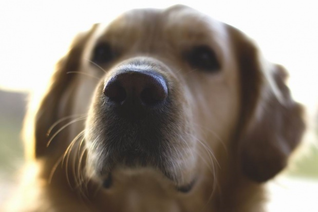Pies najlepszym asystentem dentysty