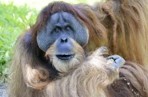 Dentystka walczy o lasy na Borneo
