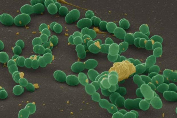 Próchnica: jak bakterie krążą w rodzinie