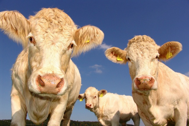 Dent-a-Medical stawia na stomatologię i … produkty rolne