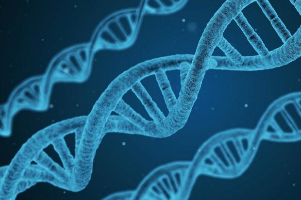 Próchnica genetycznie