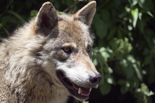 Genewa: dentysta w trybie nagłym wezwany do zoo