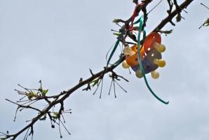 Smoczkowe drzewa docierają do Szczecina