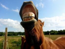 Siano przyczyną próchnicy...u koni