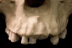 Najstarsze zęby na Ziemi