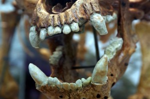 Prehistoryczna próchnica
