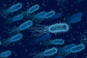 Mikrobiologia lekarska dla lekarzy dentystów