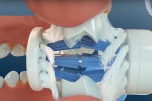 Szczoteczka do zębów: nowy projekt - stara zasada