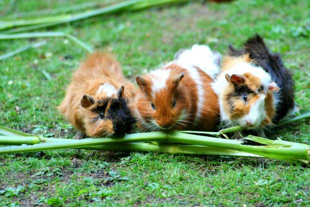 Dieta roślinna szkodzi szkliwu...zwierząt