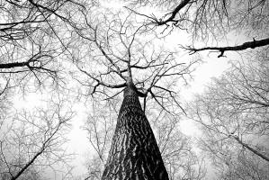 Grzybica języka i kory drzew