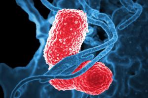 Nadmiar środków dezynfekcyjnych zwiększa oporność bakterii