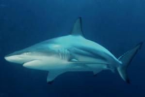 Ząb rekina tkwił w stopie przez ćwierć wieku