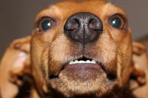 Dentystka uważała, że straciła pracę, bo pogryzł ją pies