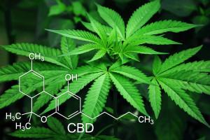 Marihuana stymuluje wzrost nowotworów głowy i szyi