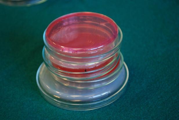 Koronawirus: cel -  20 tys. testów na dobę