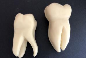 PUM: zajęcia praktyczne studentów stomatologii na…mydle