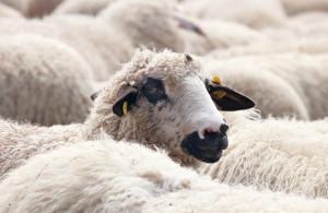 Zmiany w radiodiagnostyce: bezpieczeństwo w stomatologii, czy strzyżenie owiec?