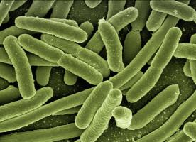 Zakrzepica zatok żylnych spowodowana przez bakterie jamy ustnej