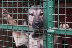 Dentysta pomaga psom ze schroniska dla zwierząt