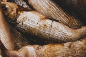 Preparat do regeneracji tkanki kostnej z odpadków przemysłu rybnego