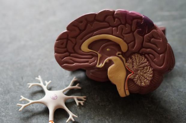 Przyczyna, dla której w COVID-19 rozwijają się zaburzenia poznawcze