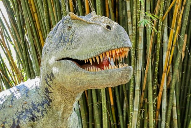 Zęby zdradzają tryb życia tyranozaura